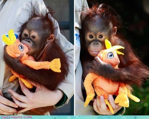 acting like animals admitting baby comparison contrast cuddling difference do want orangutan stuffed animal - 4663363328