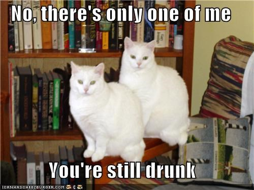 caption captioned cat Cats double vision drunk one only still - 4663702528
