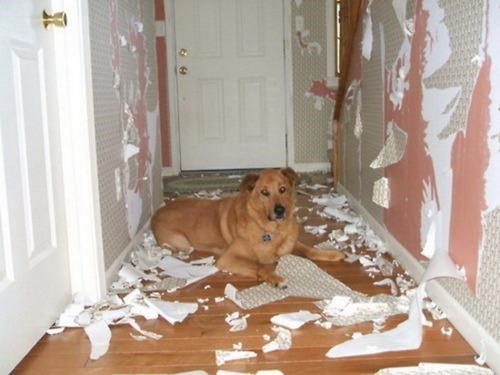 doggeh Sundog - 4663908352