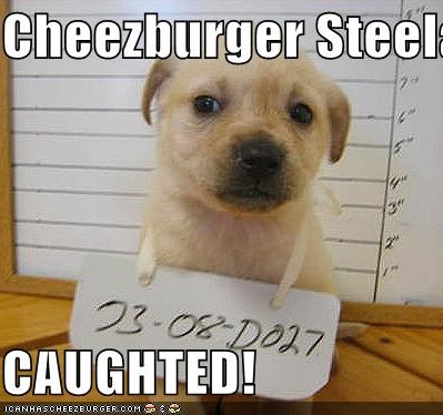 Cheezburger Image 466393856