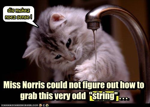 attempting,caption,captioned,cat,confused,confusion,FAIL,failing,grab,grabbing,odd,string,water