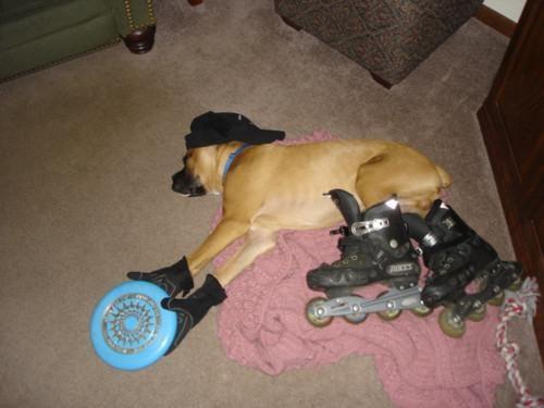 doggeh Pooped Partier Sundog - 4664752384