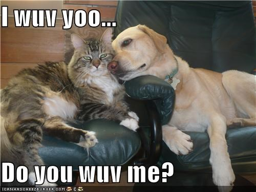 asking,cat,i love you,labrador,love,me,question