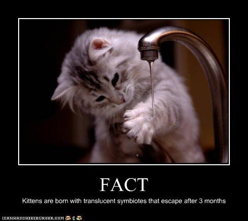 FACT Kittens are born with translucent symbiotes that escape after 3 months