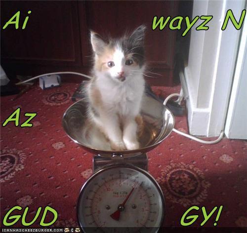 Cheezburger Image 4665312768