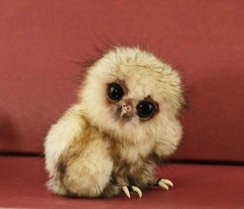 cute pictures of adorable baby owls