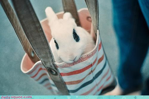 bag,Bunday,bunny,chauffeur,happy,happy bunday,rabbit,ride,style,stylish,transport,traveling