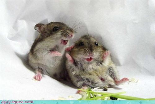 excited face Hall of Fame noms rodent rodents shocked surprise sympathy - 4666615296