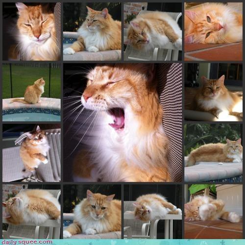 acting like animals asking cat critique model modeling options photo shoot photos - 4666632448