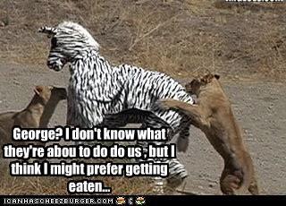 Cheezburger Image 4666871808