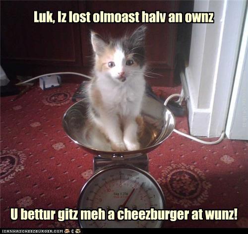 Luk, Iz lost olmoast halv an ownz U bettur gitz meh a cheezburger at wunz! KamikazeKatze 04-18-11