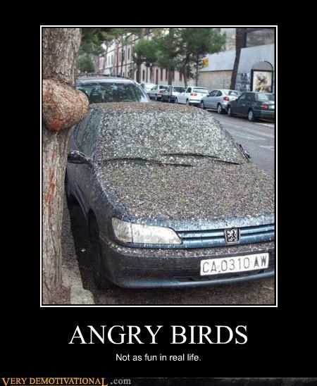 ANGRY BIRDS Not as fun in real life.