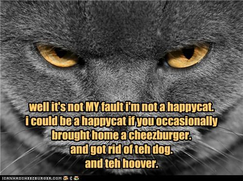Cheezburger Image 4667786496