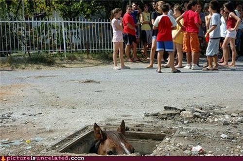 hiding horse hole kids underground - 4667809280