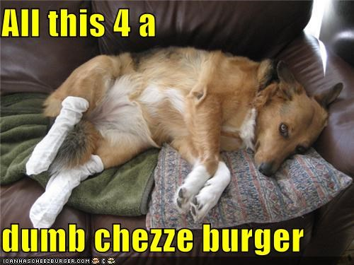 Cheezburger Image 4667822336