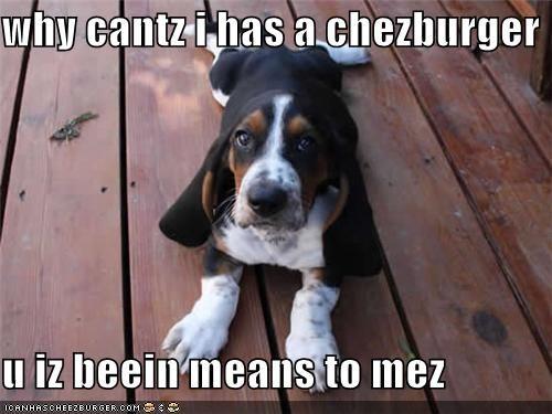 Cheezburger Image 4668036608