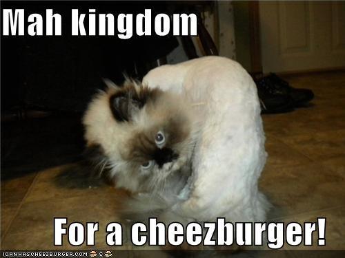Cheezburger Image 4668040448
