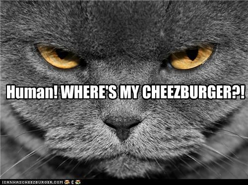 Cheezburger Image 4668177664