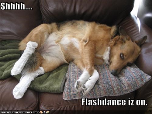 couch flashdance laying down quiet request shush television TV watching whatbreed - 4668370432