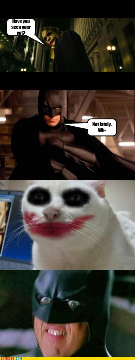 batman cat creepy joker - 4668539904