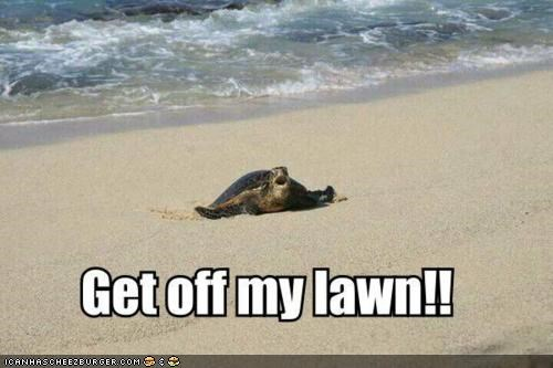 caption captioned get off my lawn grumpy lawn old old age sea turtle turtles - 4668775680