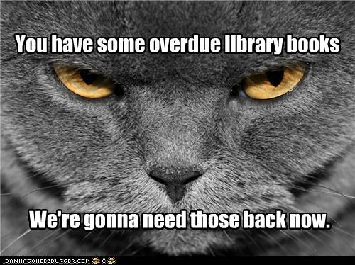 angry back best of the week books caption captioned cat closeup face Hall of Fame library need now overdue request return some Staring threat - 4668873728