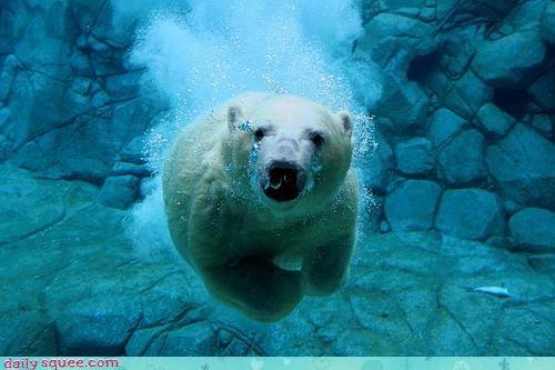 acting like animals aquatic battleship bear complex diving navigation polar bear pun sunk swimming targeting torpedo underwater war warfare warning weapon - 4669380096