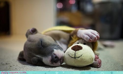 boxer,cuddling,dogs,friendship,homophone,interspecies friendship,lion,method,only way,pun,puppy,sleeping,stuffed animal,toy