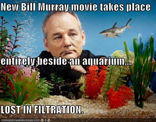 actor bill murray celeb funny - 4669514240