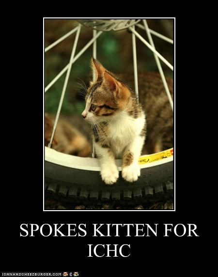 caption captioned cat ichc kitten literalism pun spokes spokesperson - 4670652416