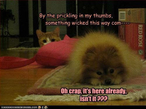 afraid,cat,comes,dramatic irony,macbeth,pomeranian,quote,realization,shakespeare,something,suspense,this way,wicked,william shakespeare