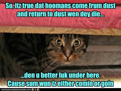 So, itz true dat hoomans come frum dust and return to dust wen dey die... ...den u better luk under here. Cause sum wun iz either comin or goin Chech1965 190411