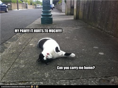 "MY PAW!!! IT HURTS TO MUCH!!!! Can you carry me home? He ""died"""