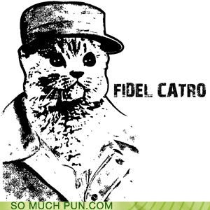 castro,cat,cuba,dictator,Fidel Castro,illustration,literalism,similar sounding