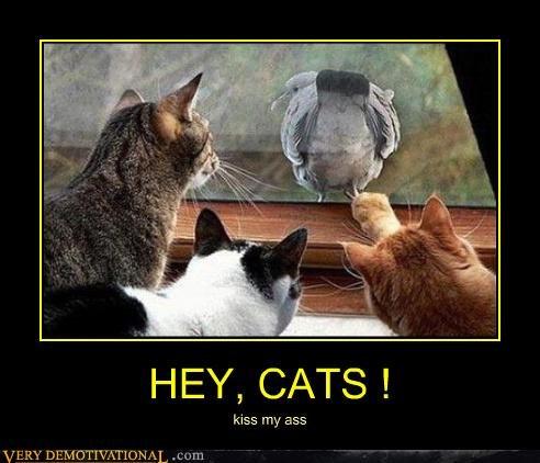 bird butt Cats window - 4672264192
