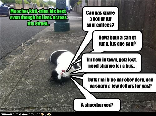 Cheezburger Image 4672316160