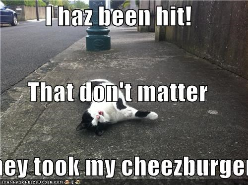 Cheezburger Image 4672488960