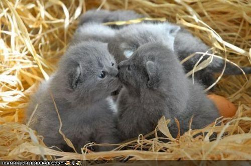 cyoot kitteh of teh day,hay,KISS,nest,two cats