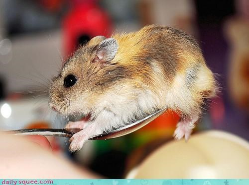 accident acting like animals afraid cheerios Command confused confusion dwarf hamster hamster name order pun shouting spoon stop warning - 4673253376