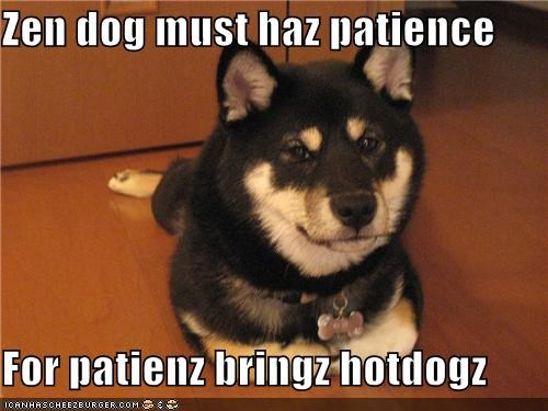 brings do want have hotdogs must noms patience reason reward shiba inu virtue zen