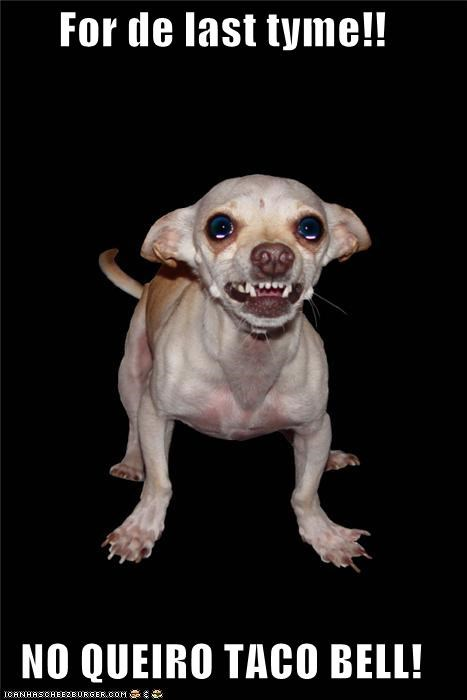 angry catchphrase chihuahua do not want last shouting slogan taco bell time upset - 4674744064