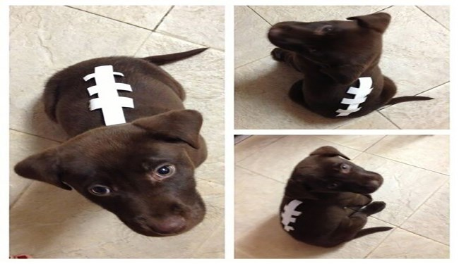 Super Bowl LII Dogs