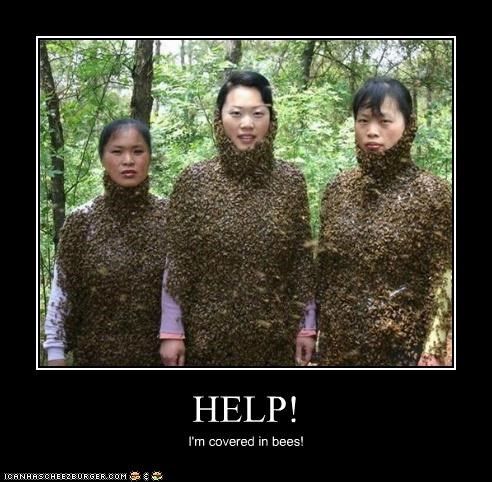 HELP! I'm covered in bees!