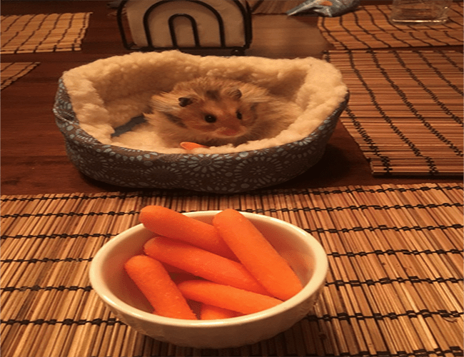 bed for a hamster