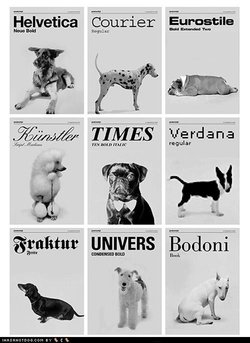 classy,dogs,fonts
