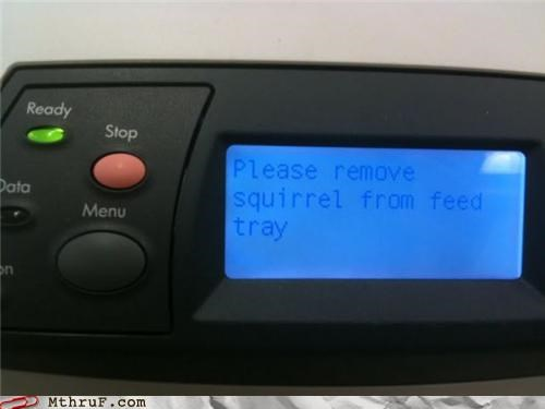 hacked,printer,squirrel