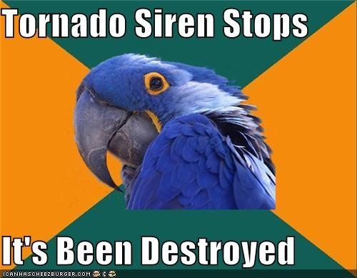 Paranoid Parrot poor taste - 4676085504