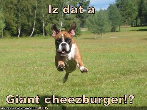 Cheezburger Image 4676154880