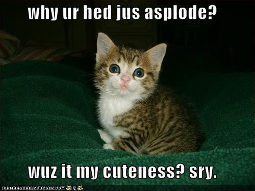 cute kitten lolcats lolkittehs - 467640064