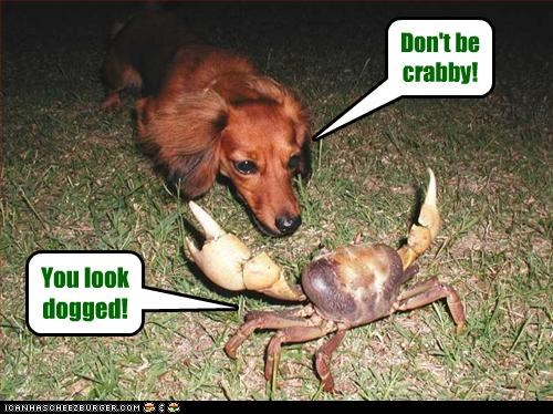 Cheezburger Image 4676412928